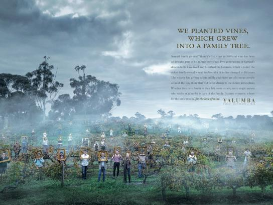 Yalumba Print Ad -  Family Tree
