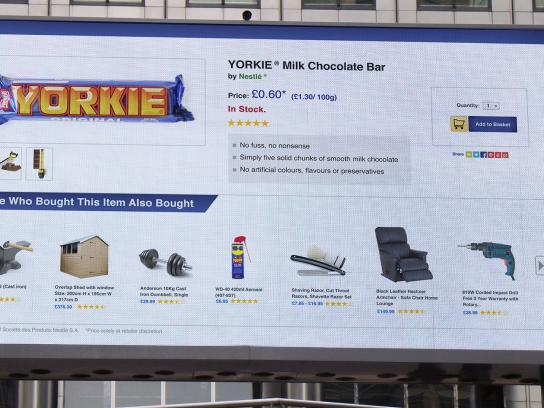 Yorkie Outdoor Ad -  No nonsense