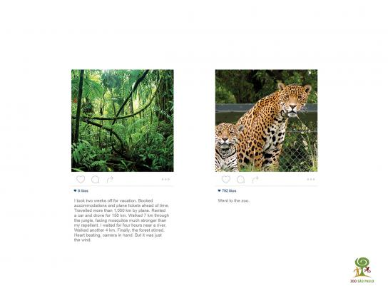 Zoológico de São Paulo Print Ad -  Jaguar