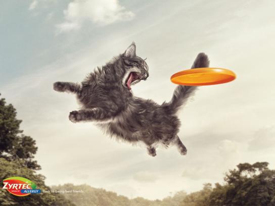 Zyrtec Print Ad -  Frisbee