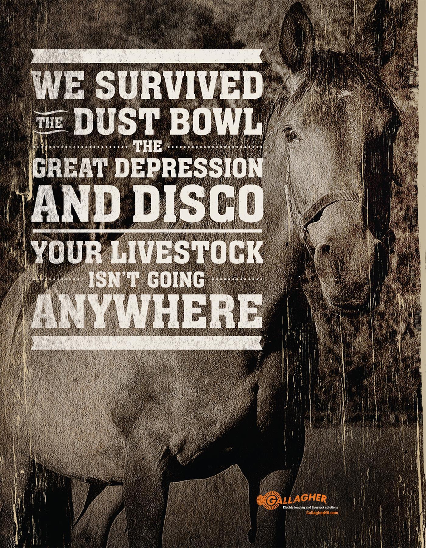 Gallagher Print Ad -  Disco
