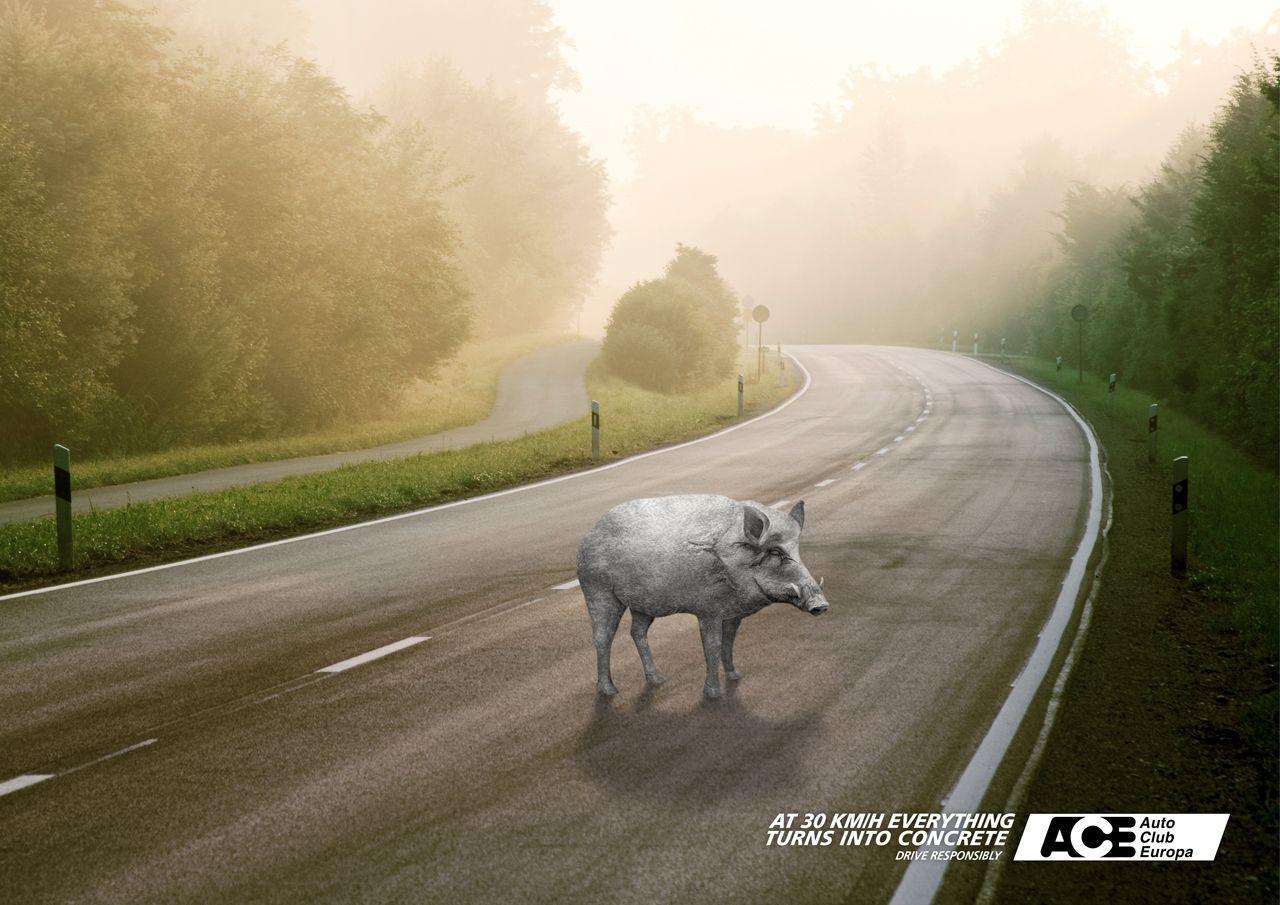 Auto Club Europa Print Ad -  Boar