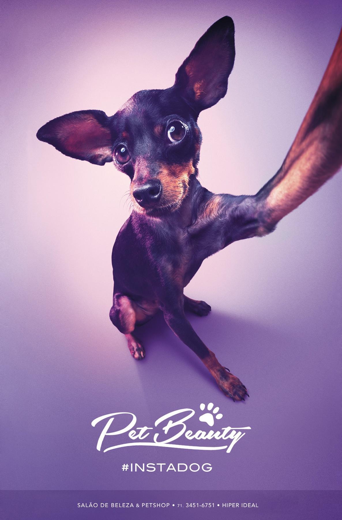 PetBeauty Print Ad -  #instadog