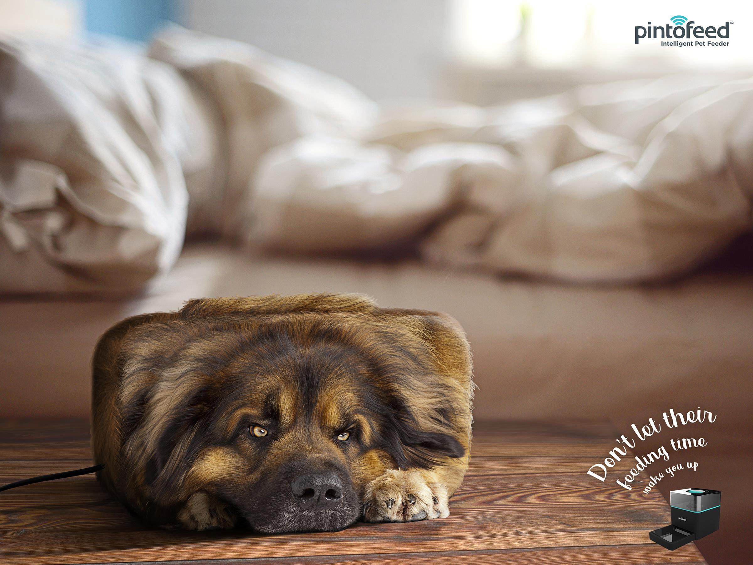 Pintofeed Print Ad - Animal Clock - Dog