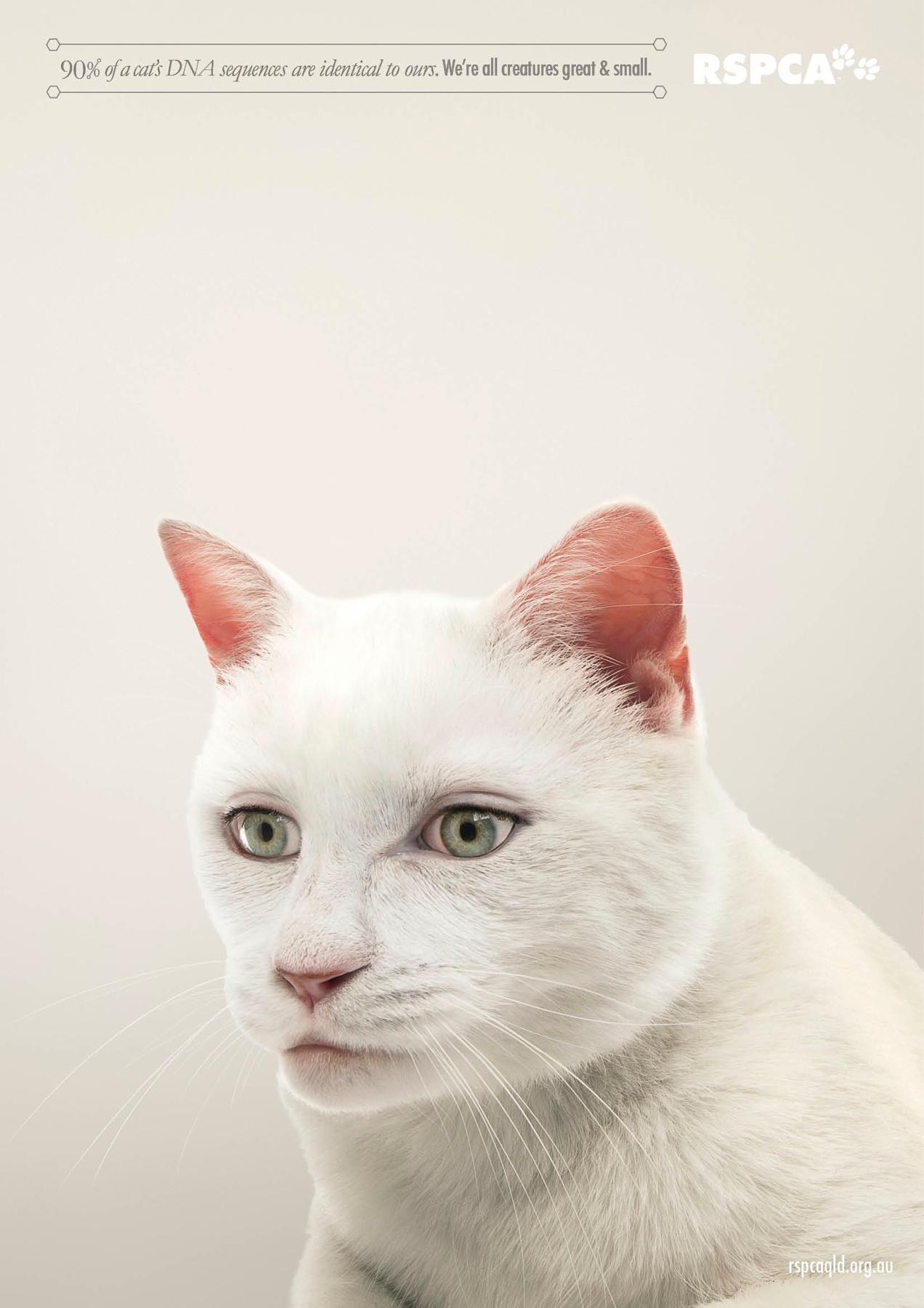RSPCA Print Ad -  Cat