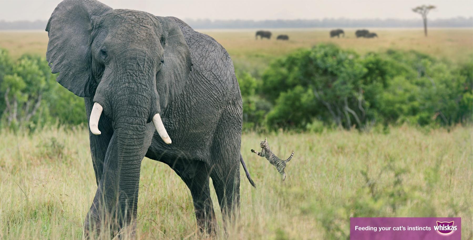Whiskas Print Ad -  Big Cat-Small Cat, Elephant