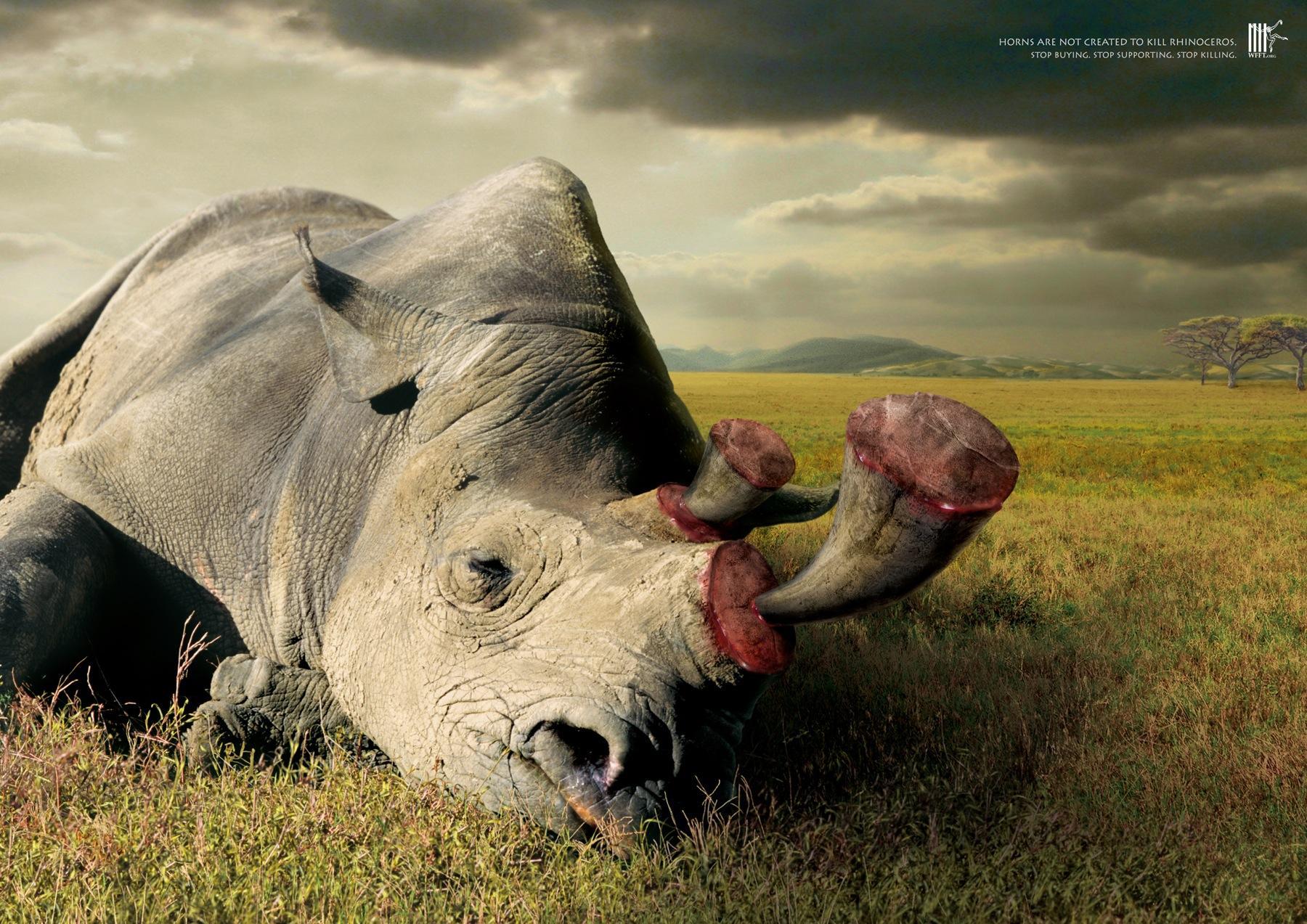 Wildlife Friend Foundation Thailand Print Ad -  Horns