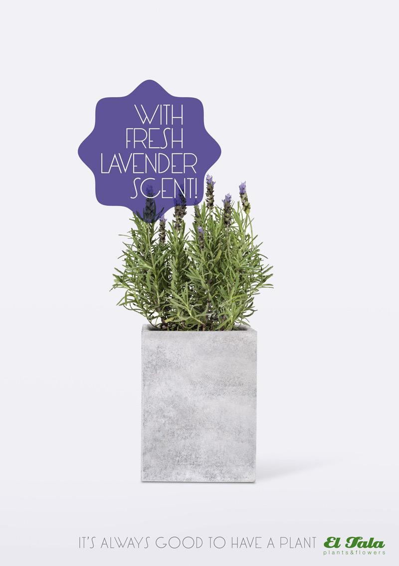 El Tala Print Ad -  Lavender