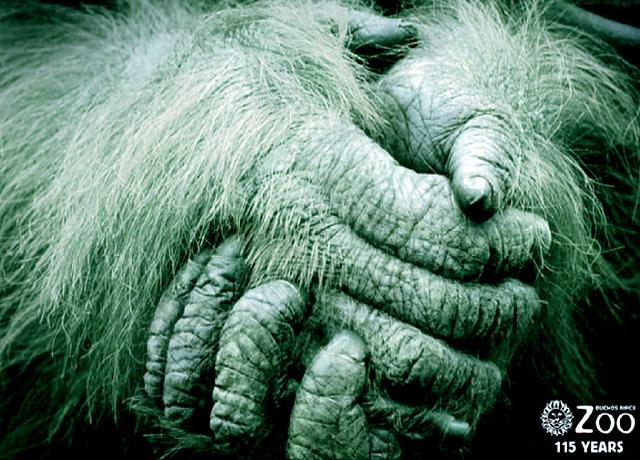 Buenos Aires Zoo Print Ad -  Hands