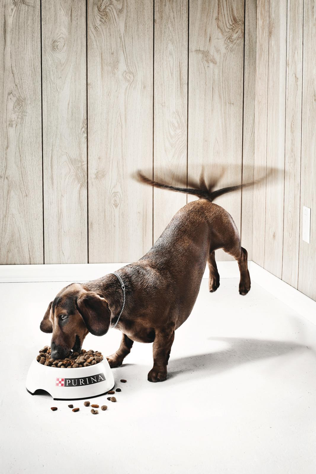 Purina Print Ad -  The Dog