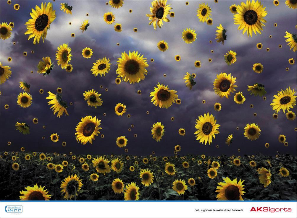 AKSigorta Print Ad -  Sunflowers