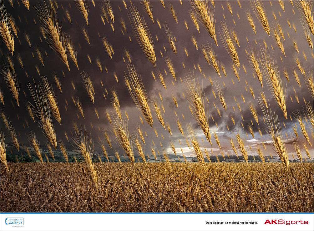 AKSigorta Print Ad -  Wheat