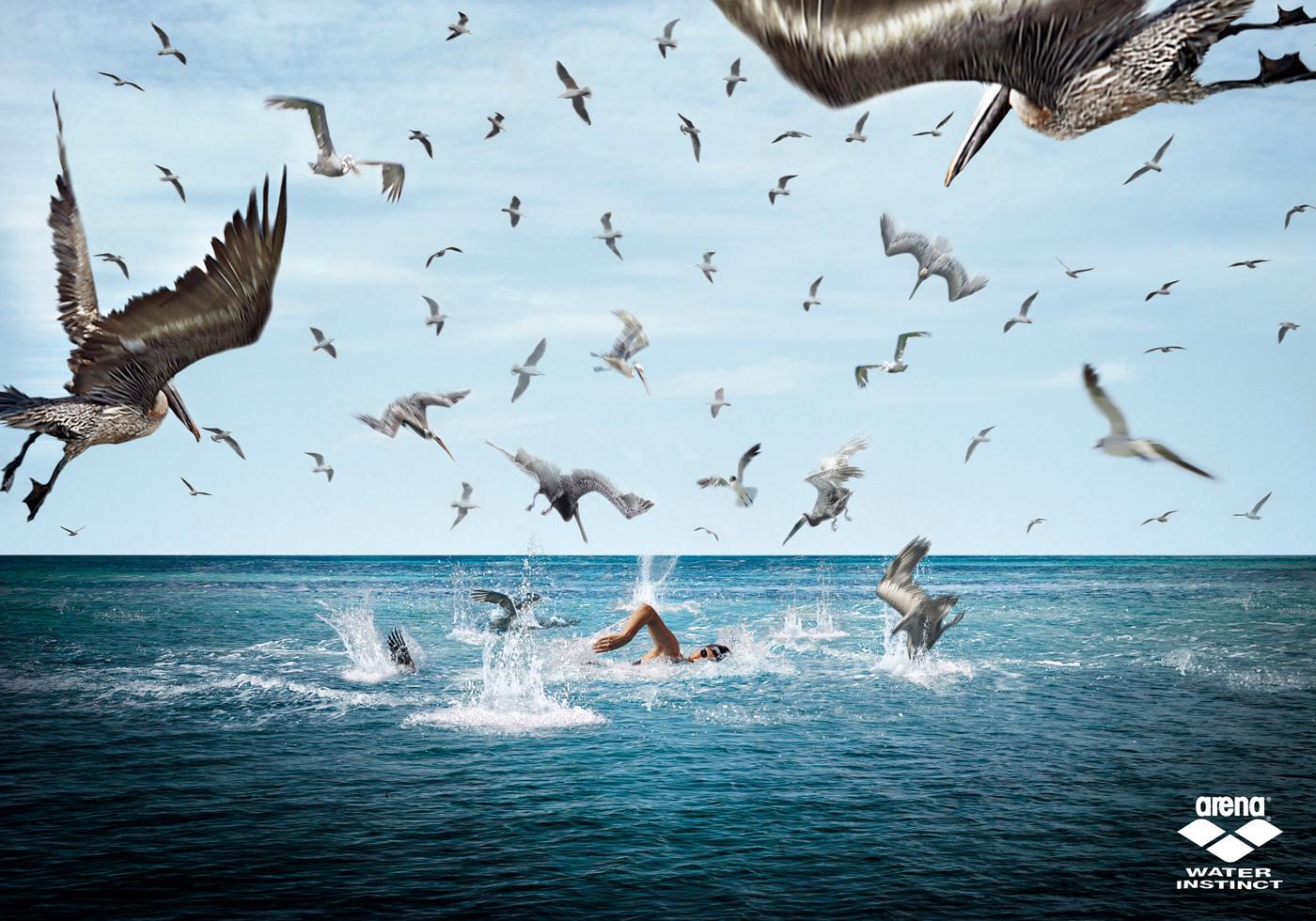 Arena Print Ad -  Birds