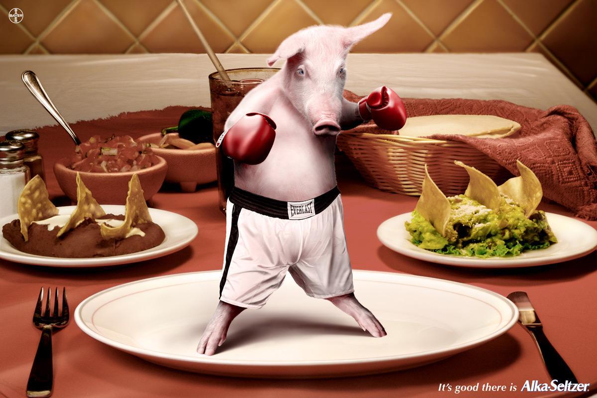 Boxer pig