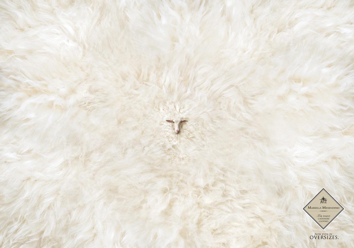 Cashmere Sheep
