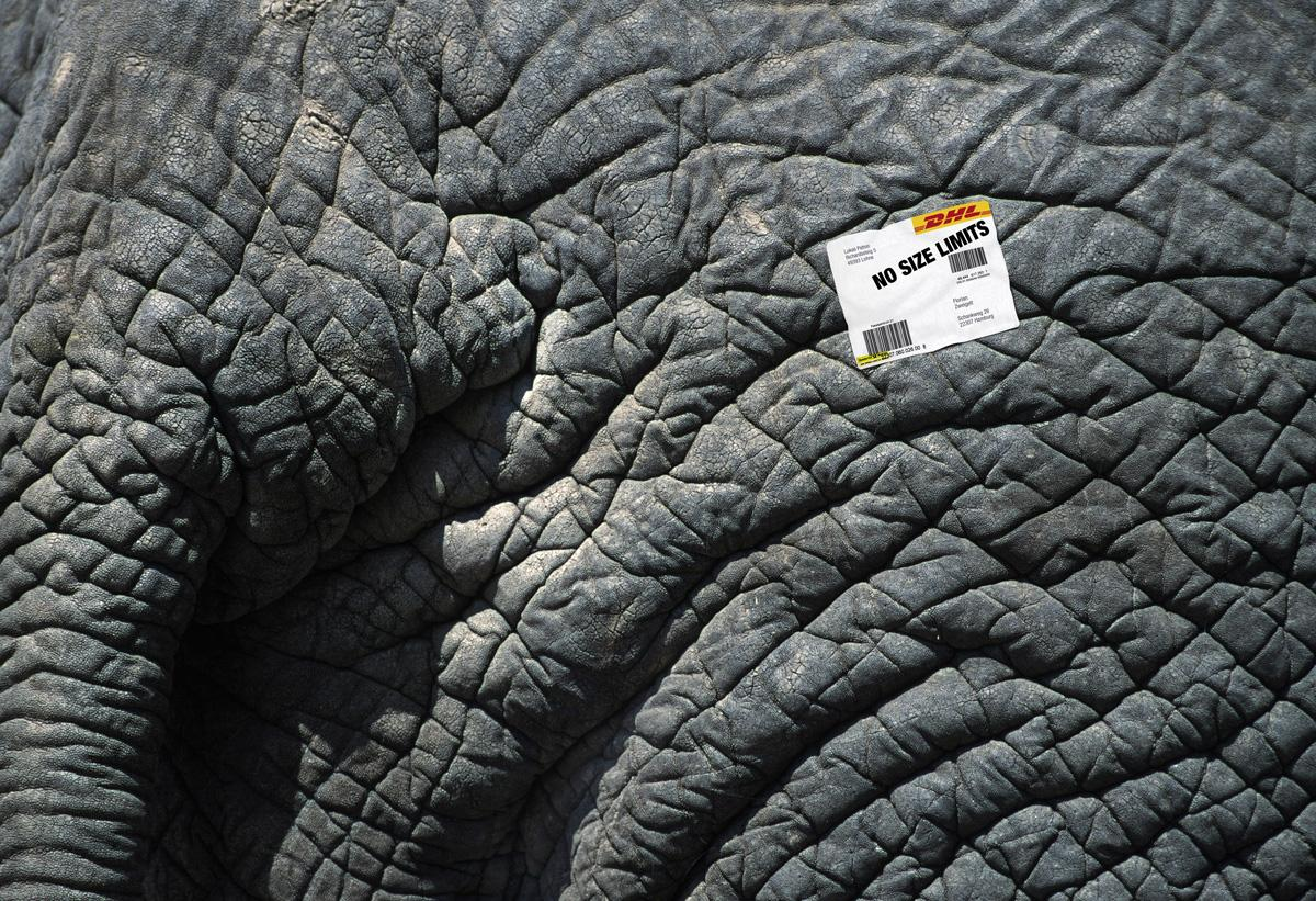 DHL Print Ad -  Elephant