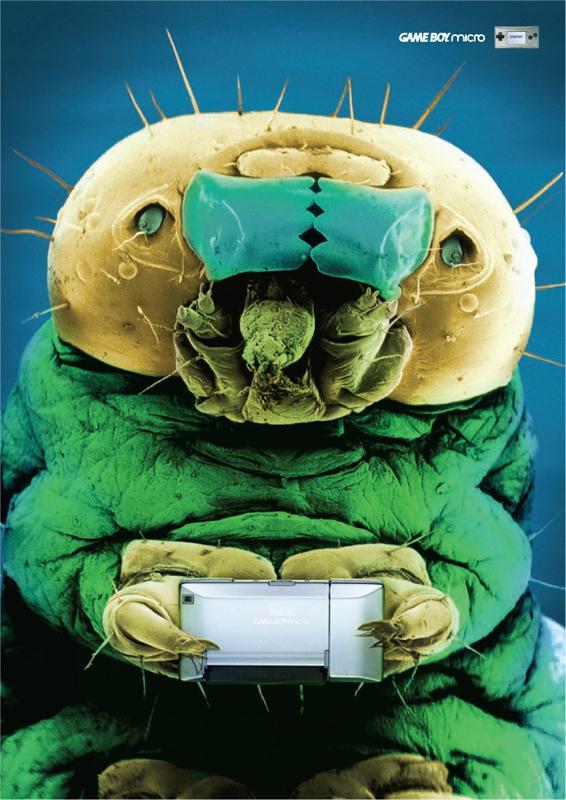 Bug two