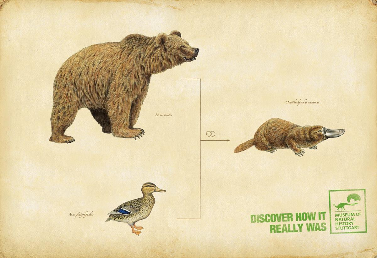 Museum of Natural History Stuttgart Print Ad -  Duckbill