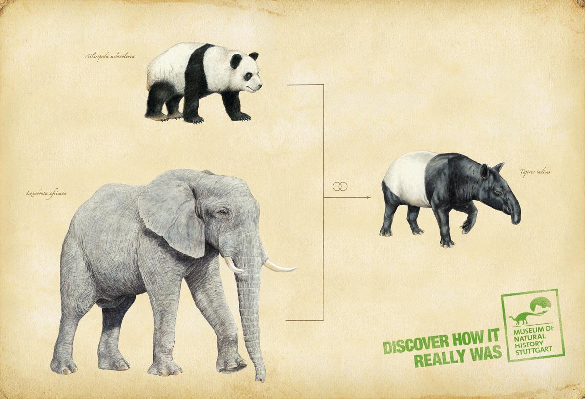 Museum of Natural History Stuttgart Print Ad -  Tapir