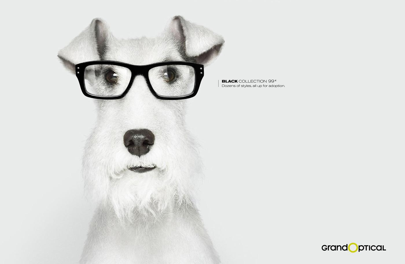 GrandOptical Print Ad -  Dog 2
