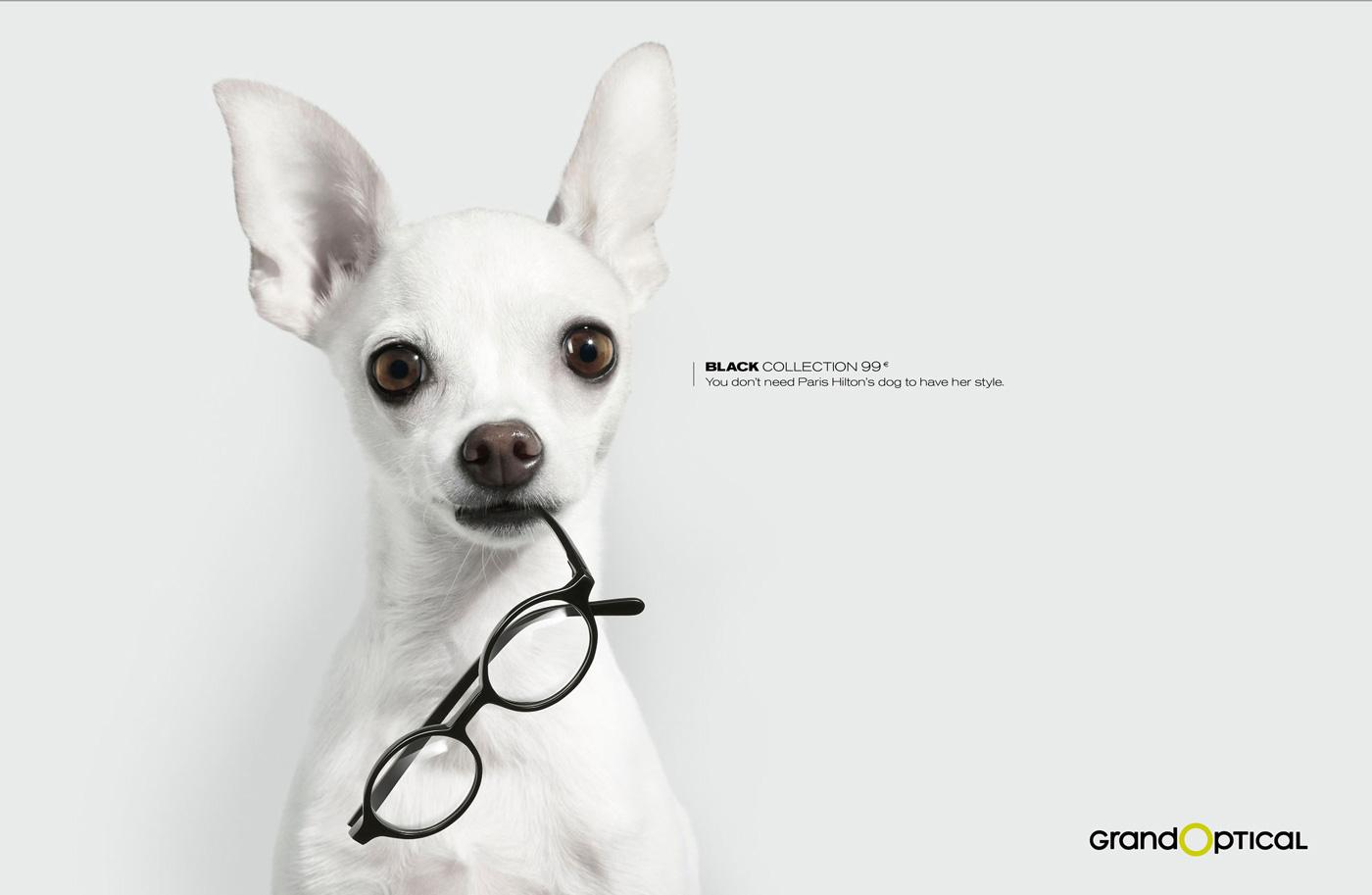 GrandOptical Print Ad -  Dog 3