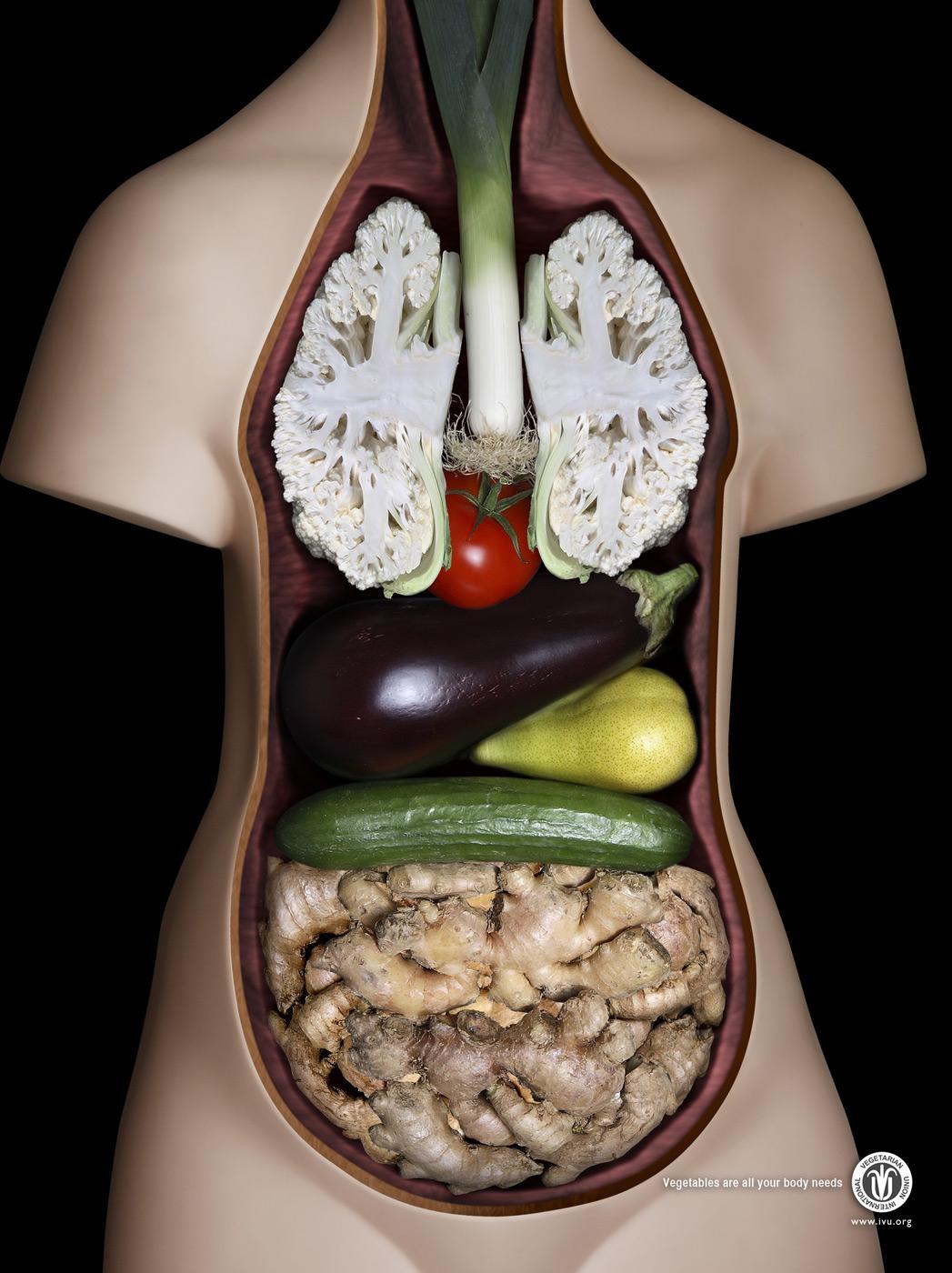 IVU Print Ad -  Anatomy Model Woman