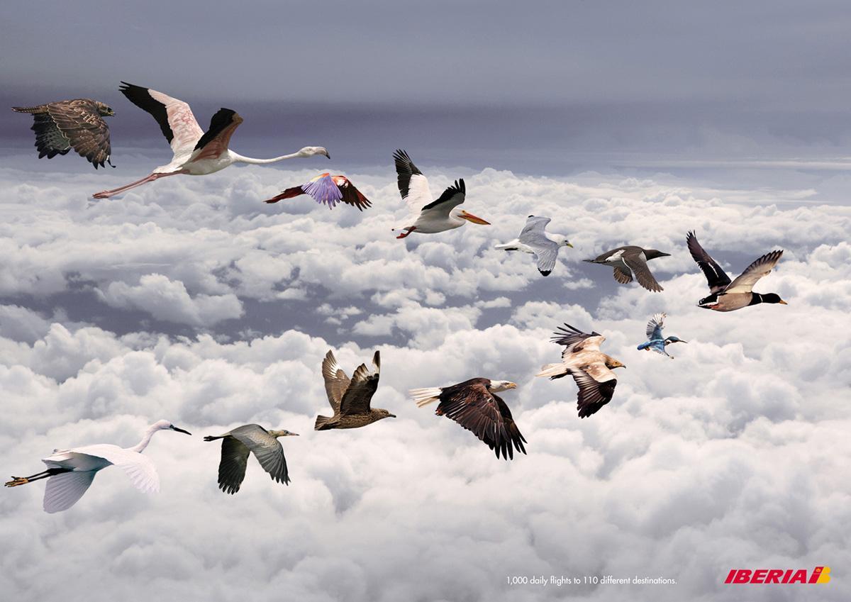 Iberia Print Ad -  Birds