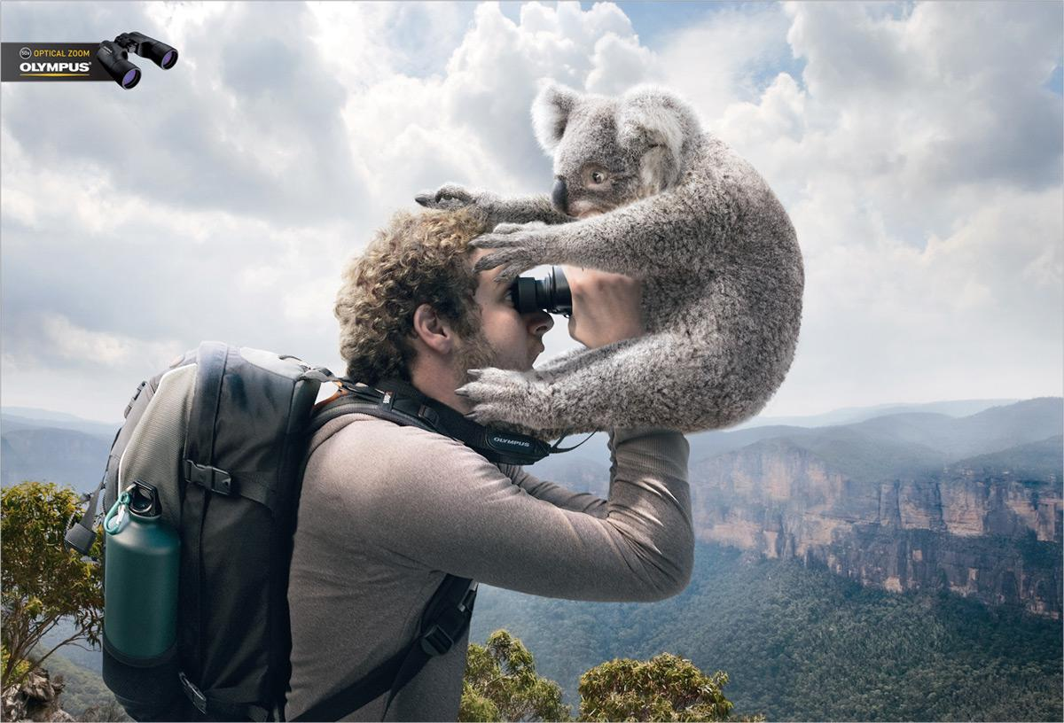 Olympus Print Ad -  Koala