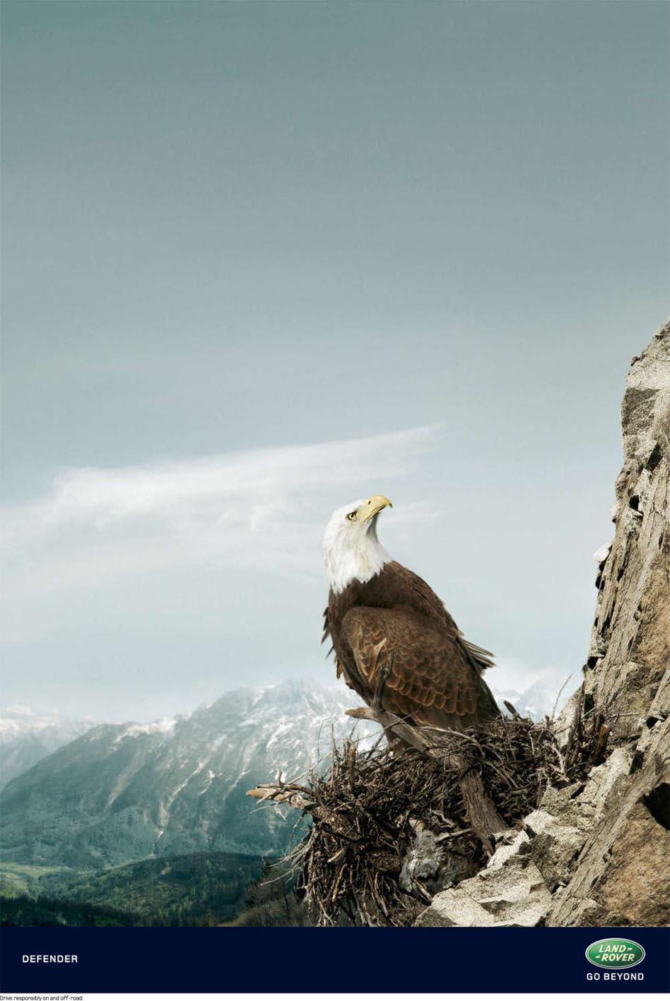 Land Rover Print Ad -  Eagle