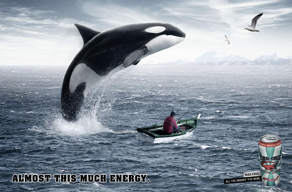 Mad-Croc Print Ad -  Whale