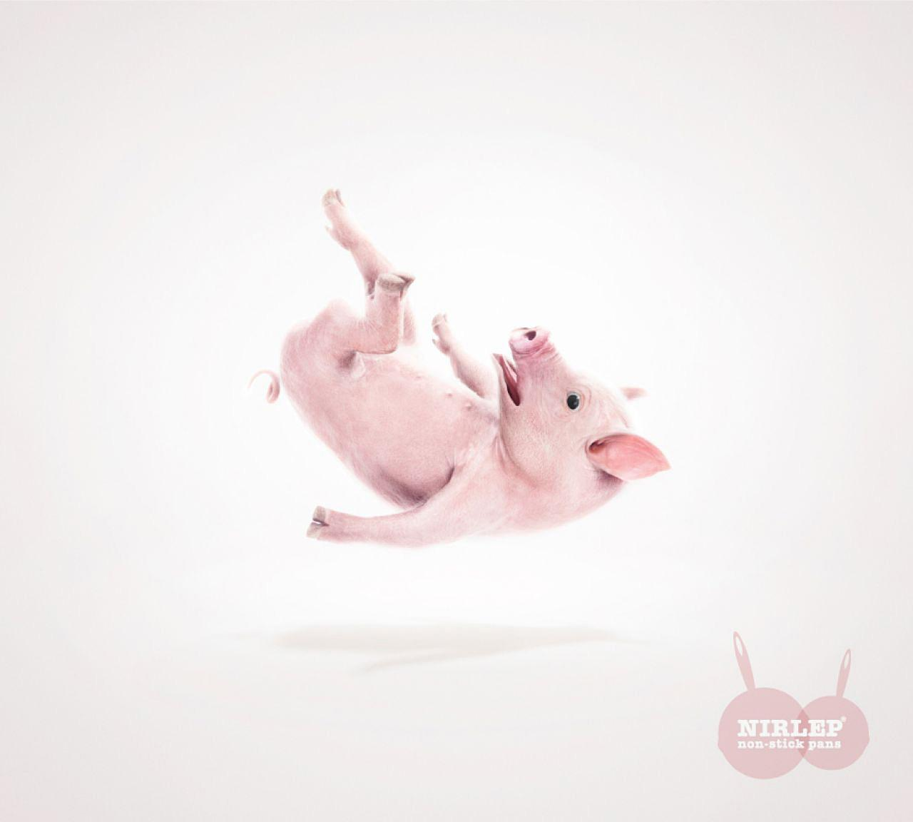 Nirlep Print Ad -  Pig
