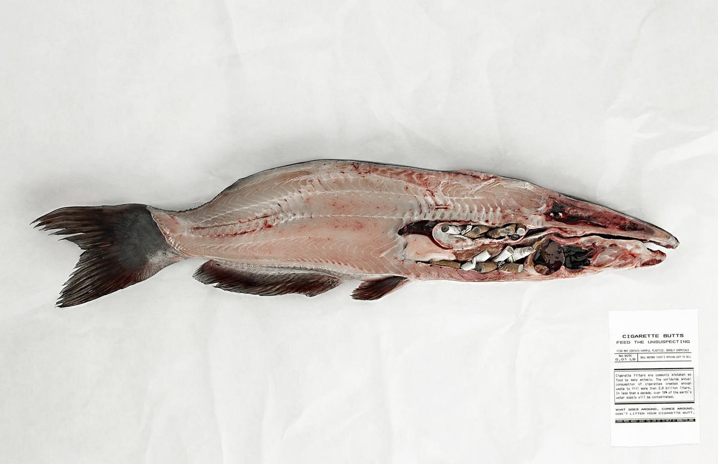 NoButts.org Print Ad -  Catfish