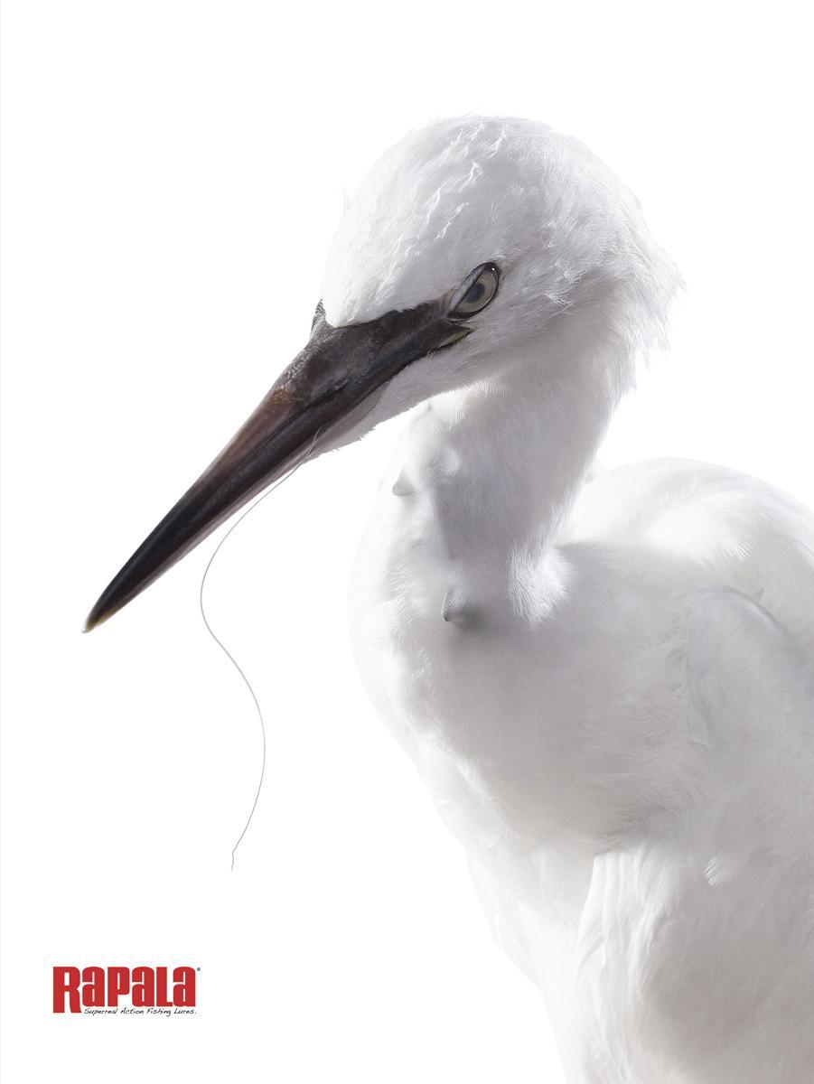 Rapala Print Ad -  Bird