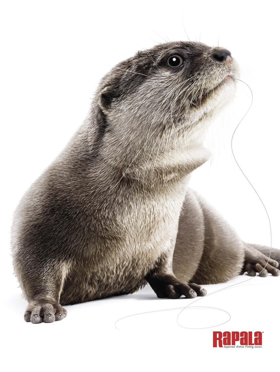 Rapala Print Ad -  Otter