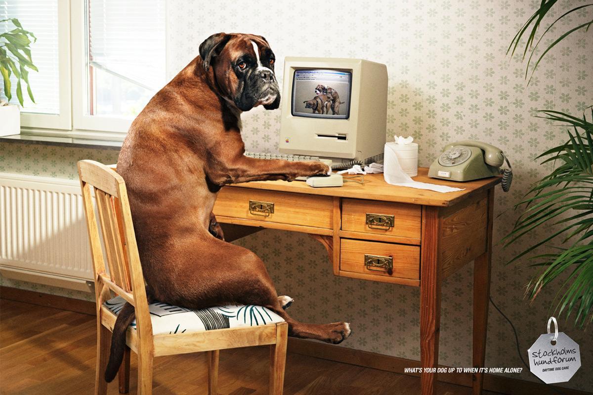 Stockholms Hundforum Print Ad -  Wanking dog
