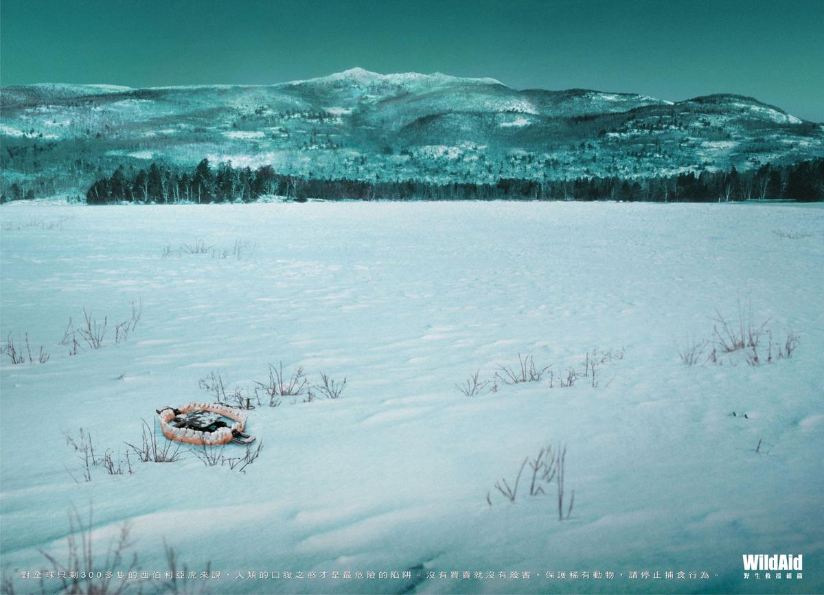 WildAid Print Ad -  Siberian Tiger