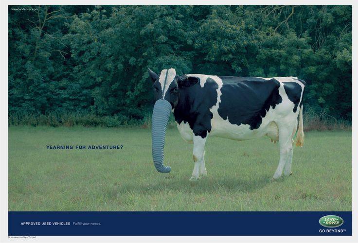 Land Rover cow