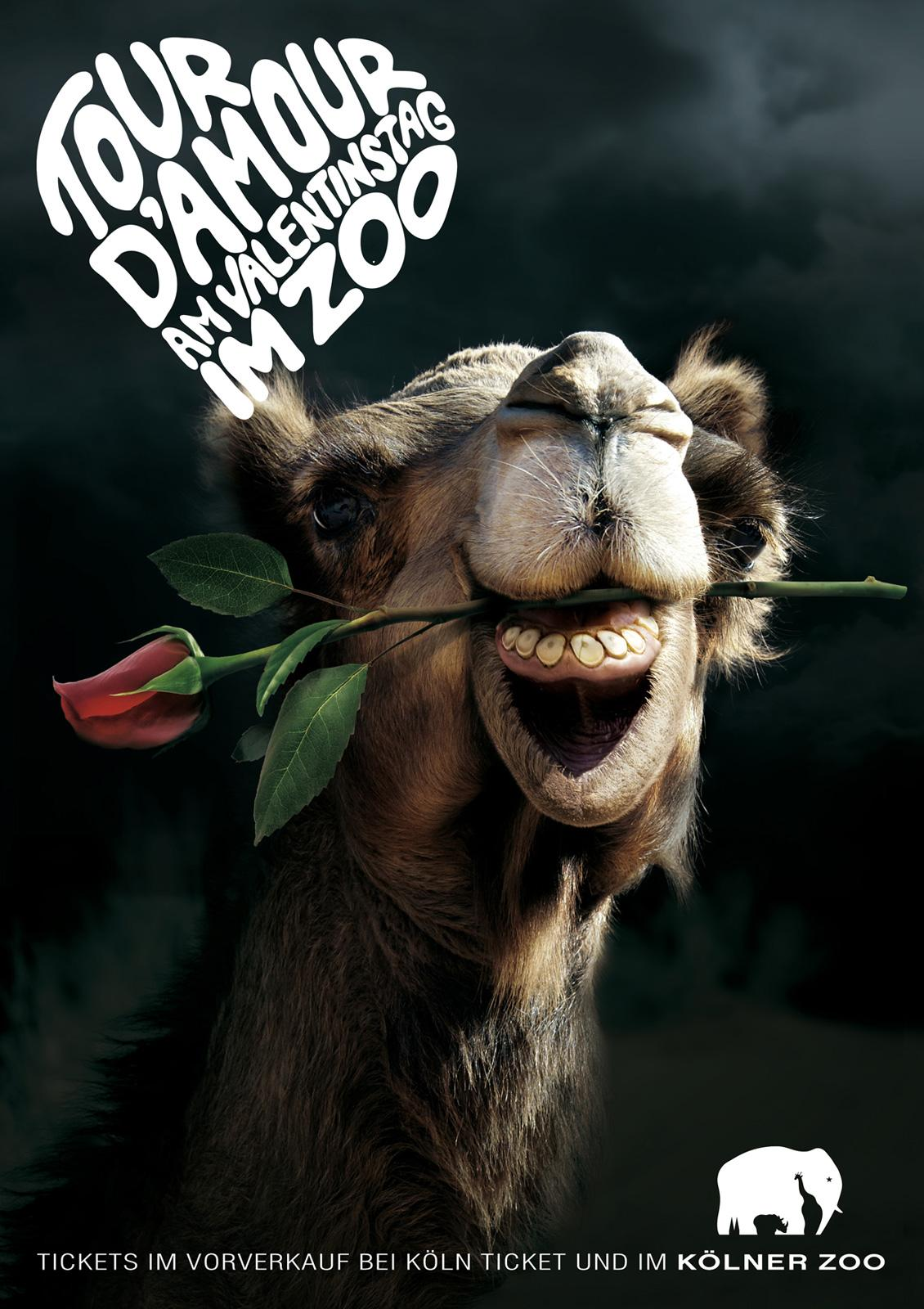 Zoo Cologne Print Ad -  Knight of the Roses, Camel