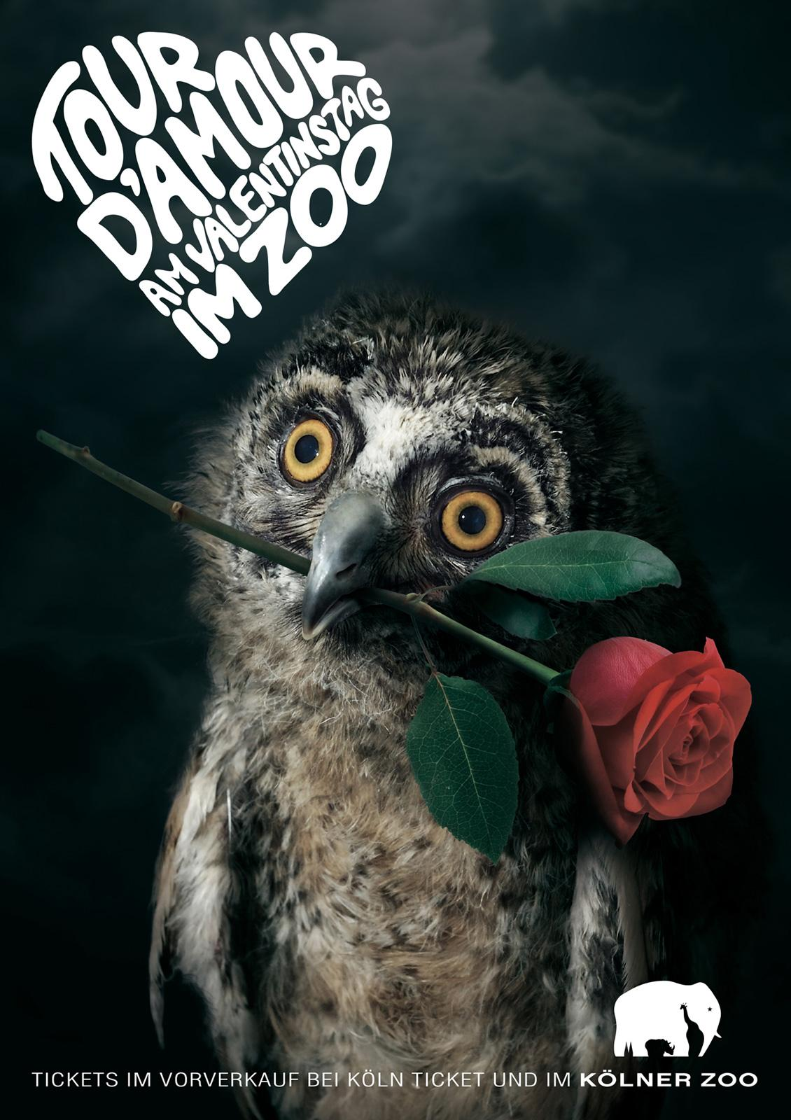 Zoo Cologne Print Ad -  Knight of the Roses, Owl