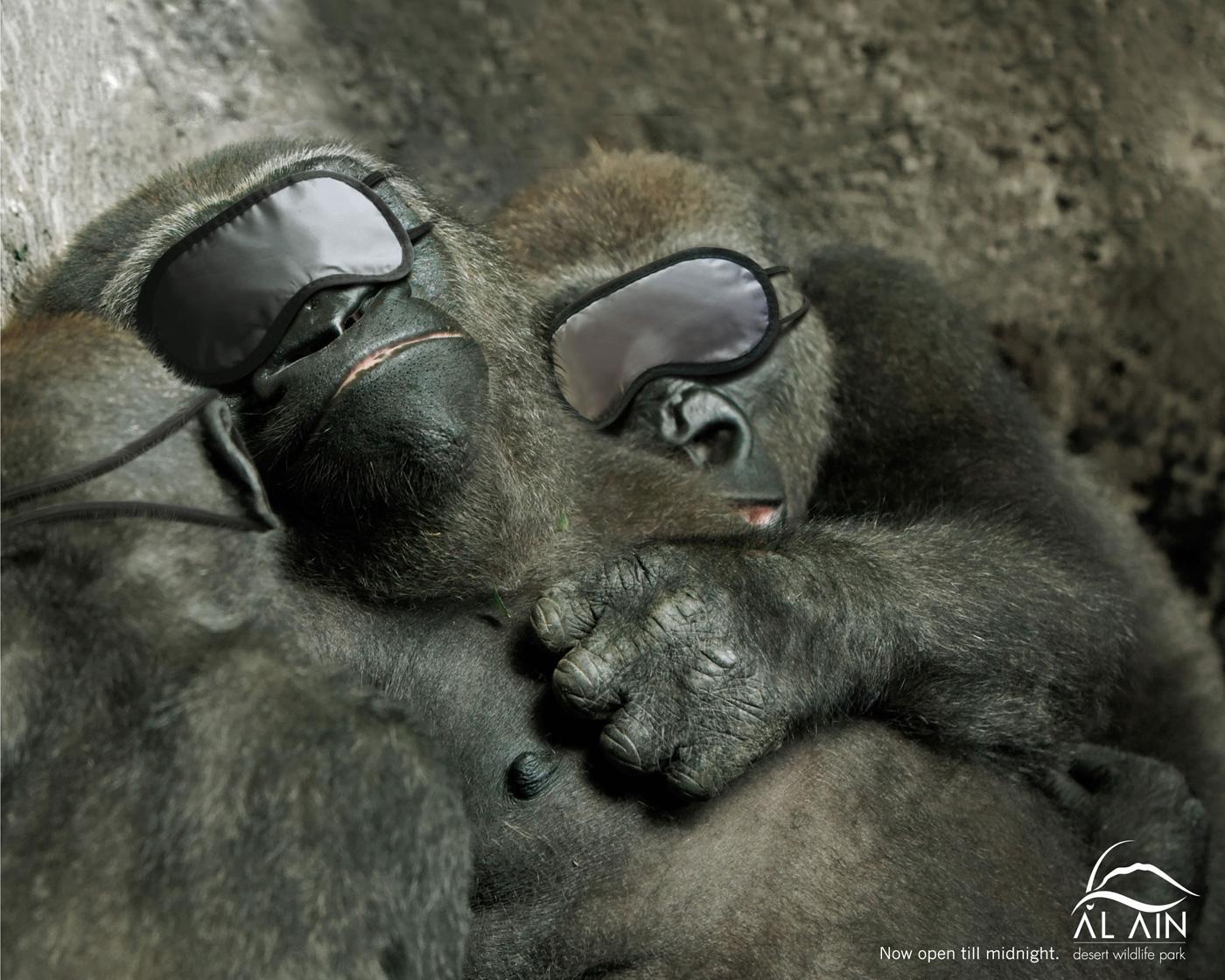 Al Ain Desert Wildlife Park Print Ad -  Gorillas