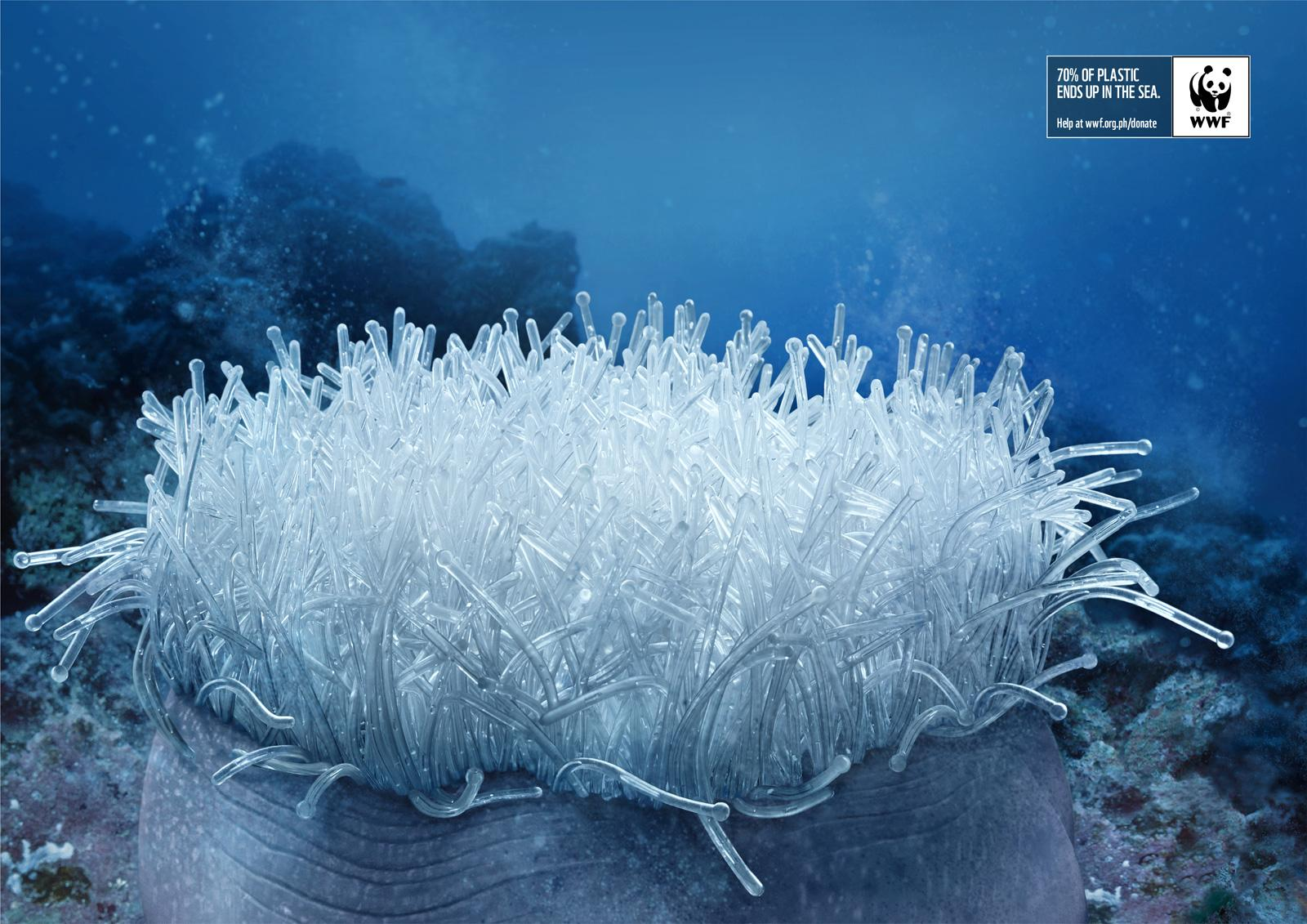 WWF Print Ad -  Anemone