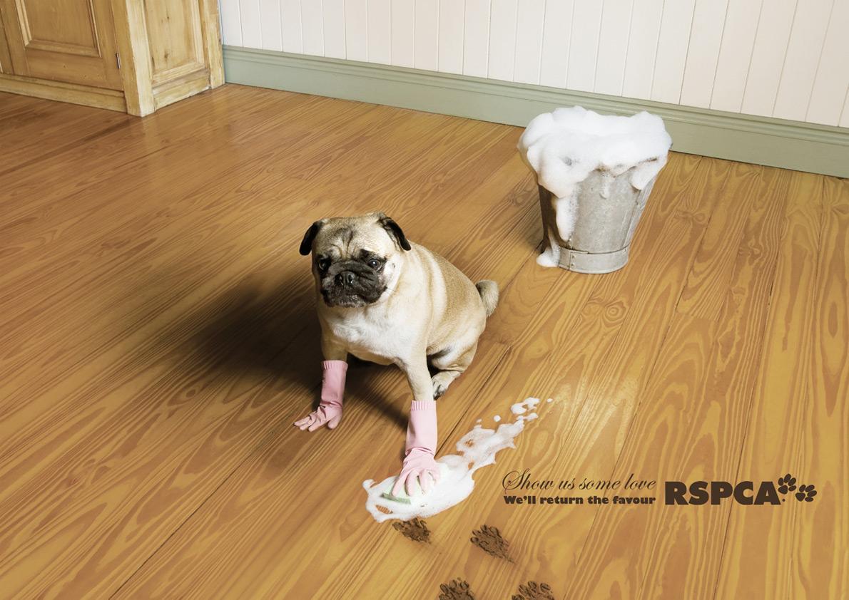 RSPCA Print Ad -  Mop