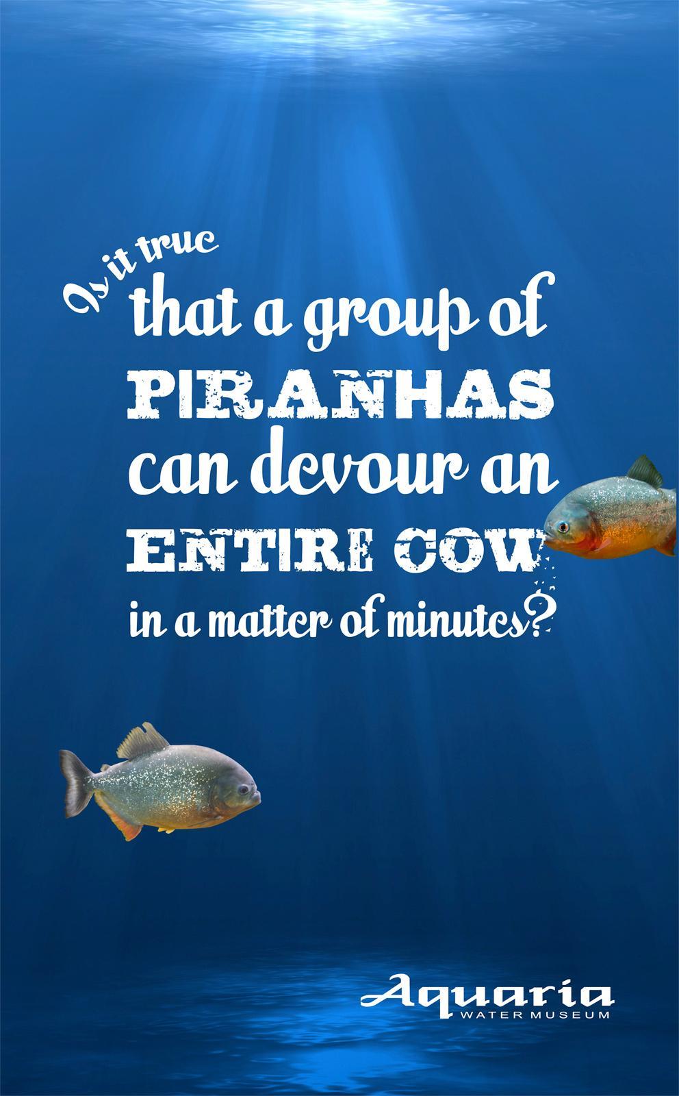 Aquaria Watermuseum Outdoor Ad -  Wet facts, Piranha