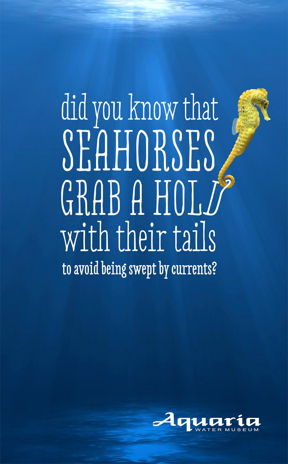 Aquaria Watermuseum Outdoor Ad -  Wet facts, Seahorse