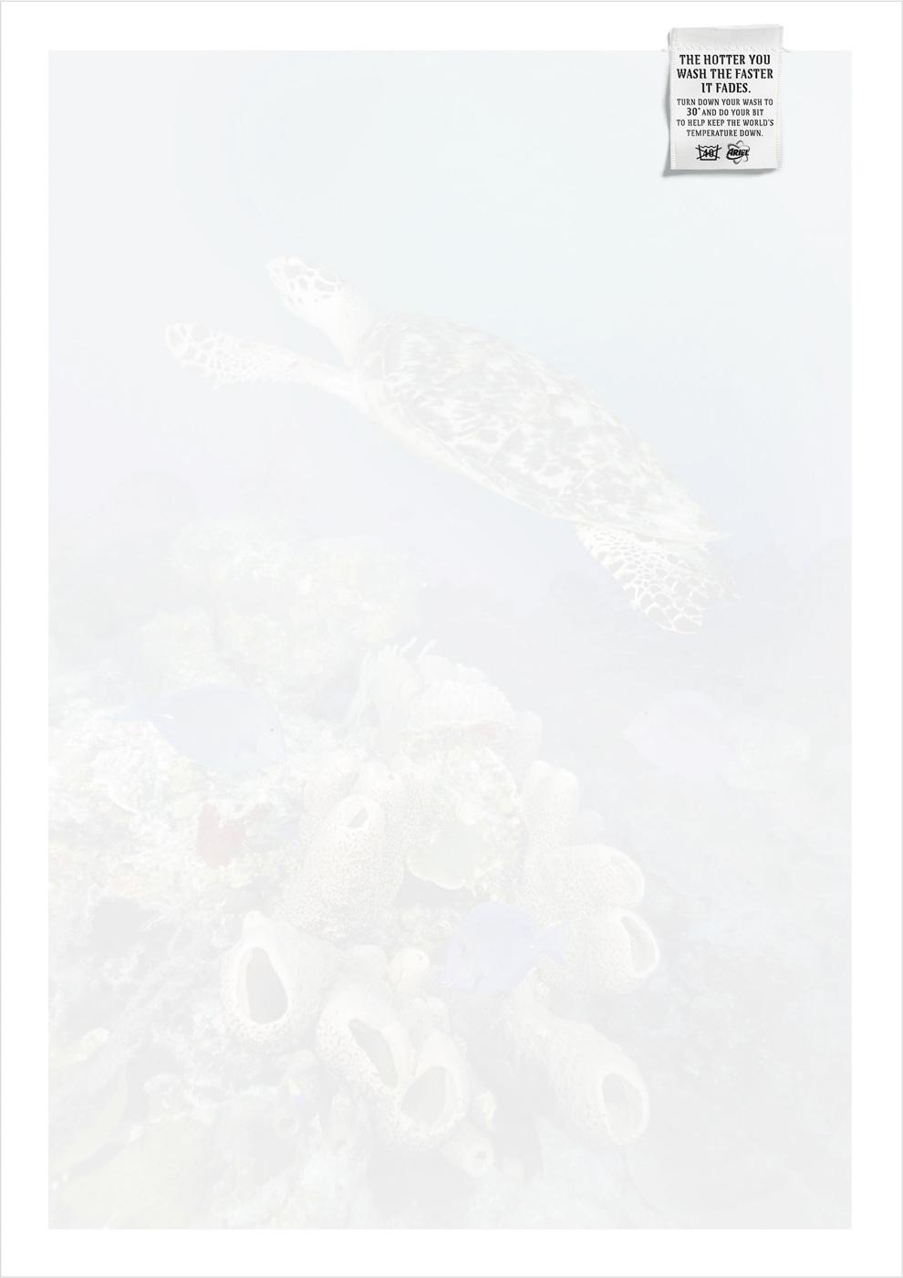 Ariel Print Ad -  Sea turtle