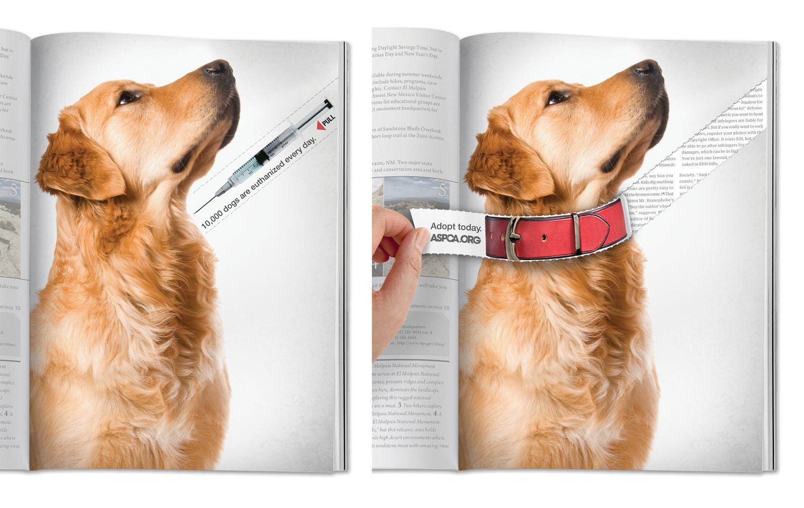 ASPCA Print Ad -  Dog Collar