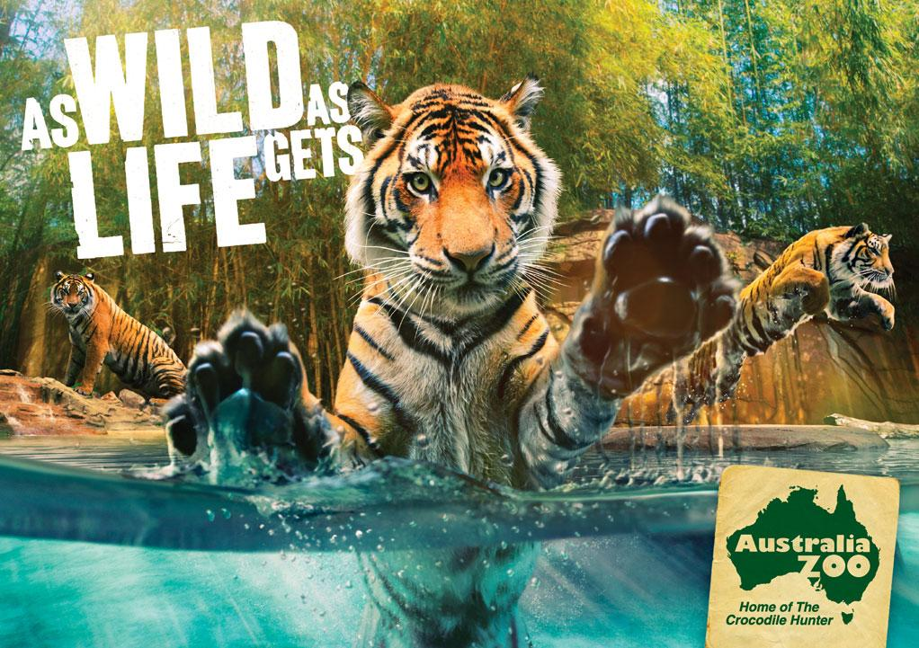 Australia Zoo Print Ad -  Tiger