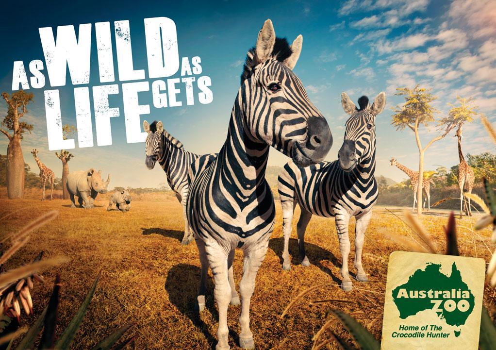 Australia Zoo Print Ad -  Zebra