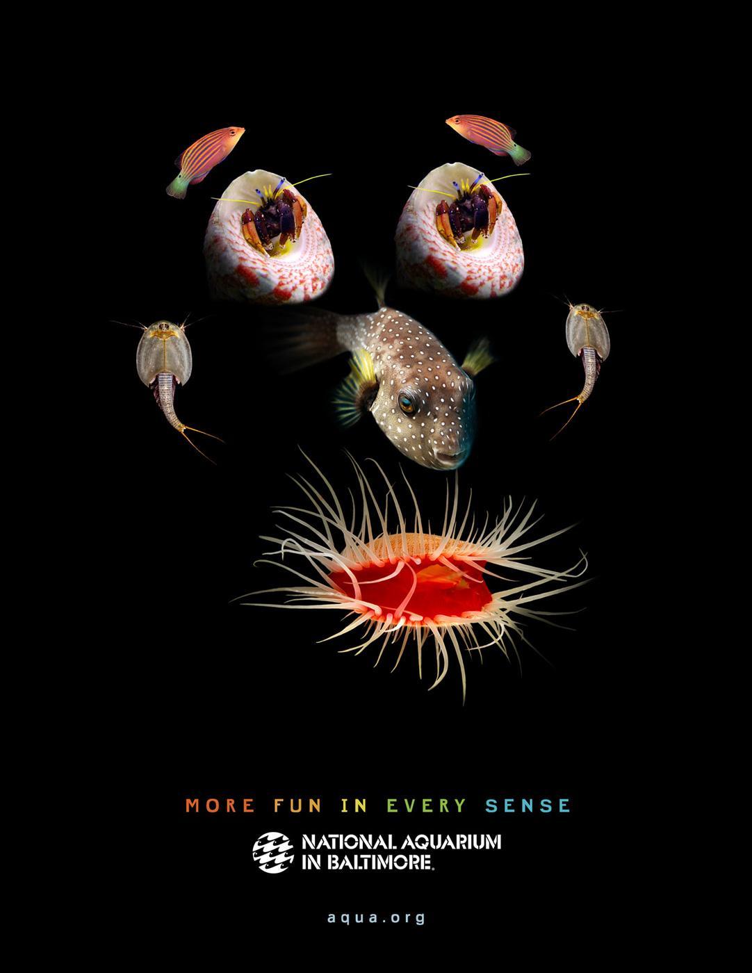 National Aquarium in Baltimore Print Ad -  More fun in every sense, 3