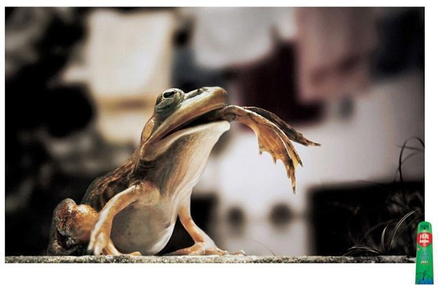 Frog eats frog